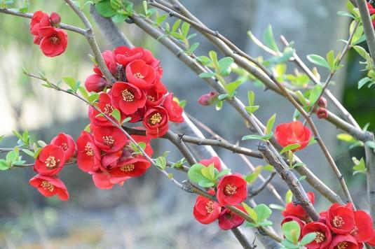 笑顔はいわばふくよかに香る心の花である Y.S.様